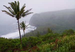 A misty Pololu Valley Lookout