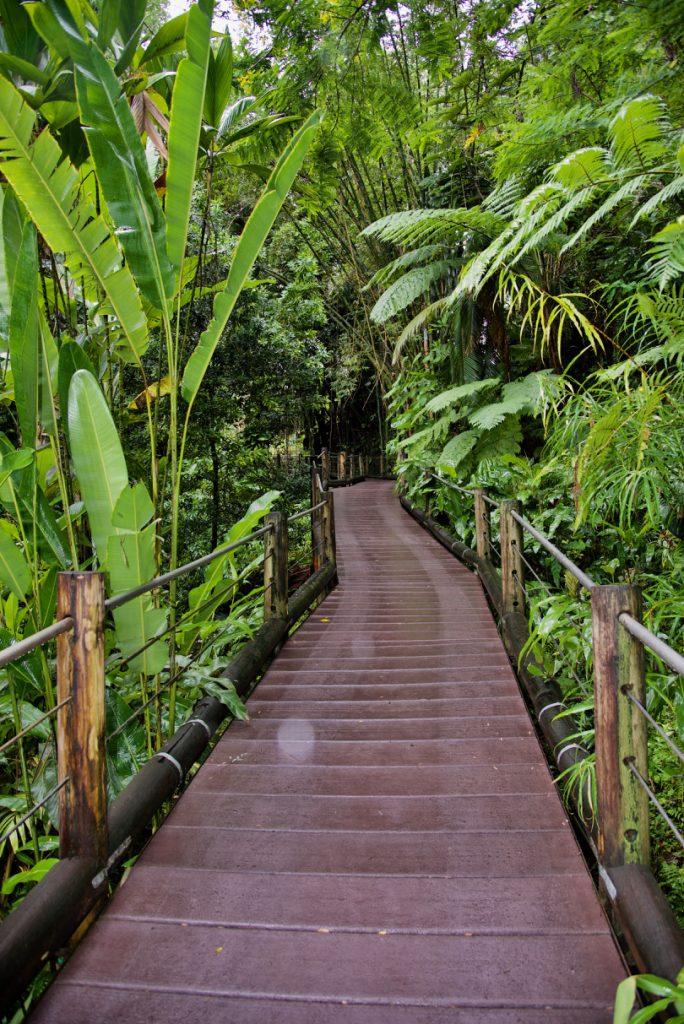 The path at Hawaii Tropical Botanical Garden