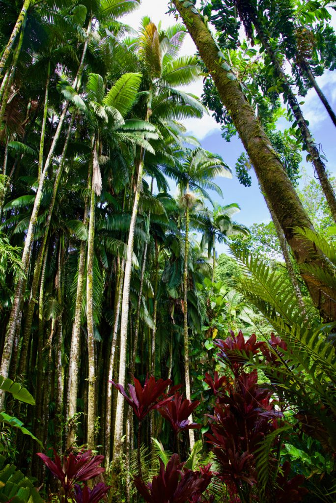 Lushness of the Hawaii Tropical Botanical Gardens