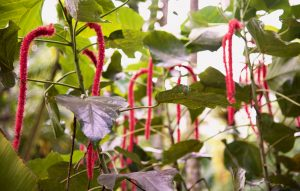 Plants that look like pipe cleaners.