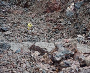 Rebirth of life after a volcano.
