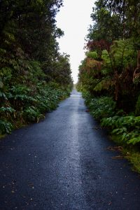 A road right out of a horror movie.