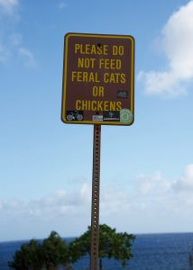Warning about feral cats and chickens.
